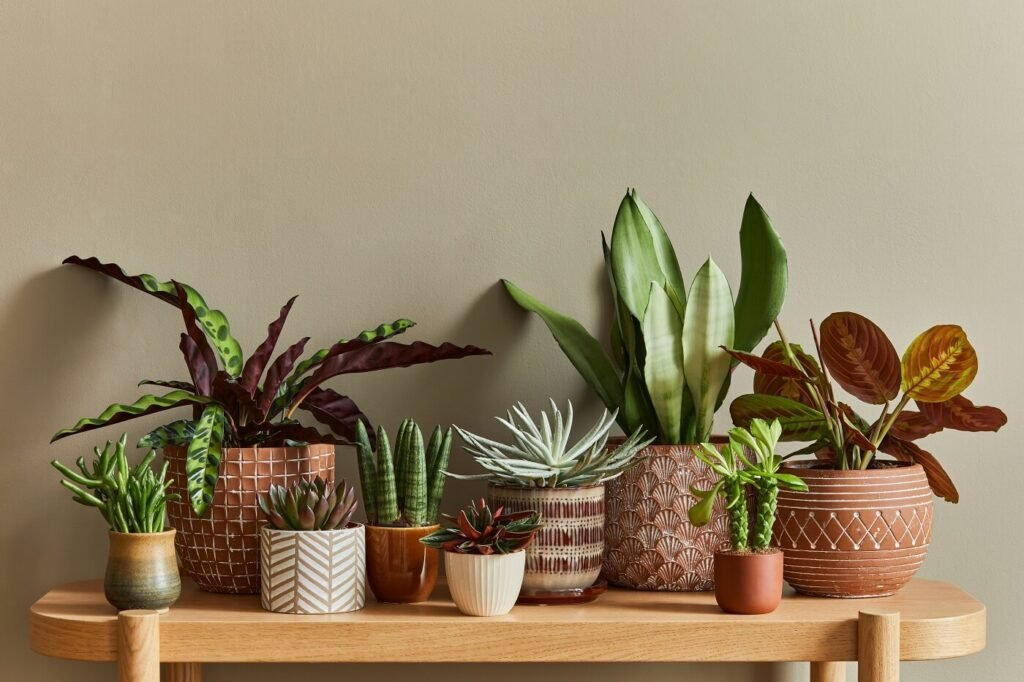 The Best Plant Shops and Plant Delivery Services in Phoenix, Arizona