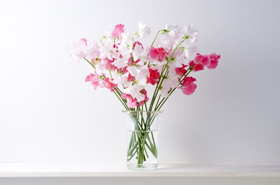 The Cultural Significance of Sweet Pea Flowers