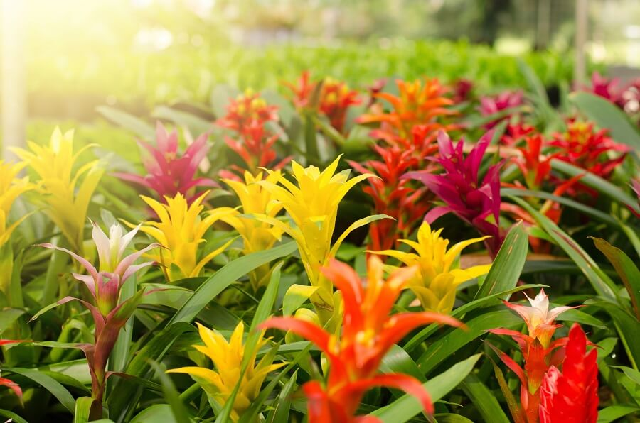 The Role Light Plays in Bromeliad Plant Health and Growth