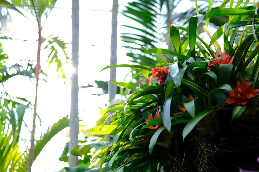 The prevailing light conditions for bromeliad plant growth