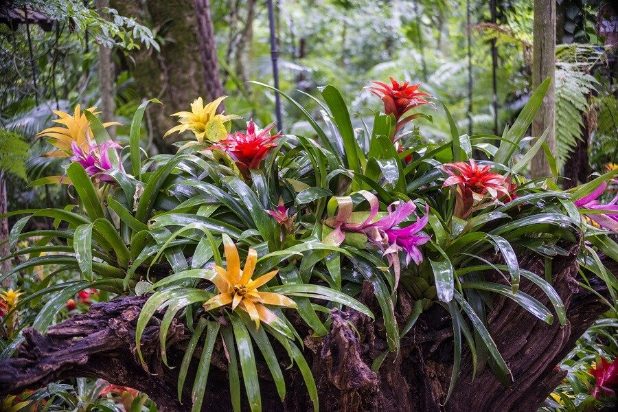 Typical Light Conditions Bromeliad Plants Receive in Their Native Habitats