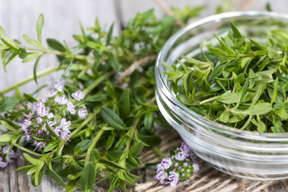 Uses and Benefits of Savory Flowers