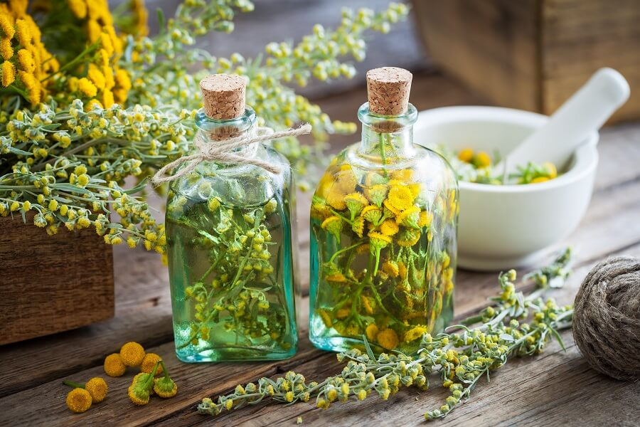 Uses and Benefits of Tansy Flowers