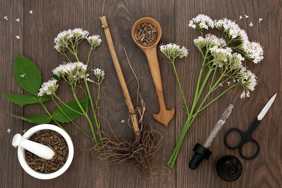 Uses and Benefits of Valerian Plants