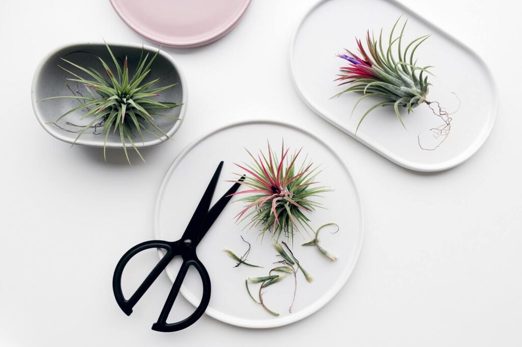 When, How and Why to Prune Bromeliad Plants