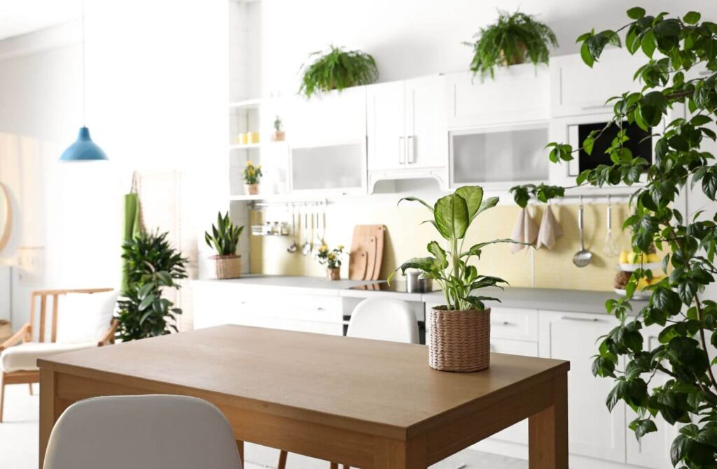 8 Best Feng Shui Plants for the Kitchen
