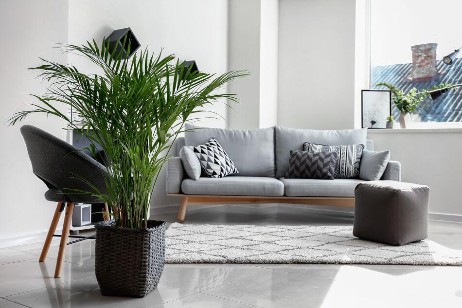 About Areca Palm Plants