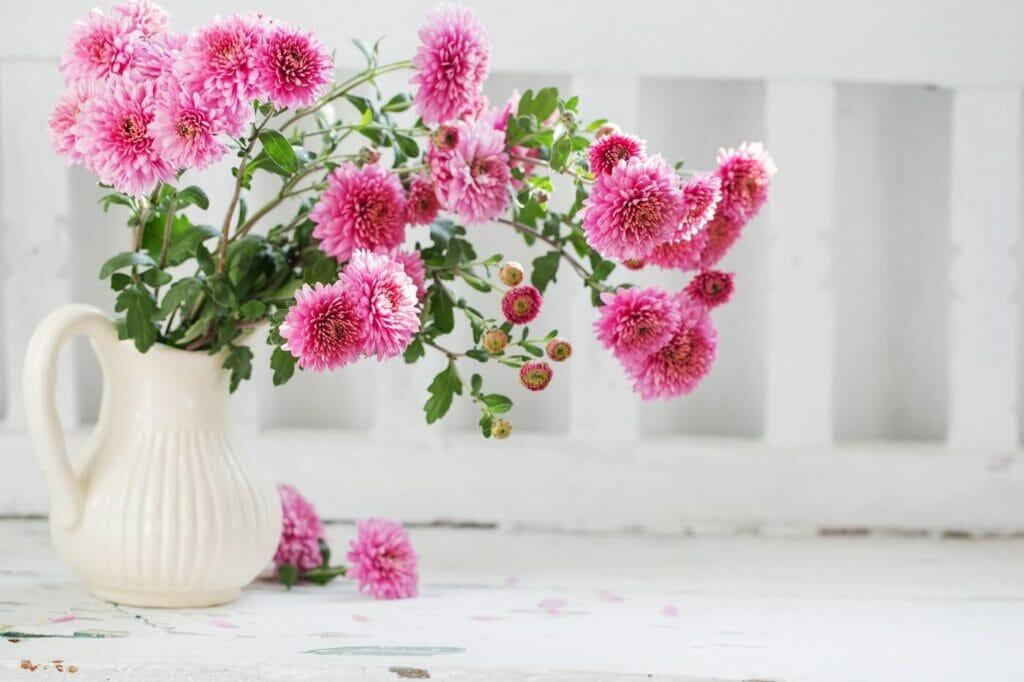 Chrysanthemum Flower Meaning & Symbolism