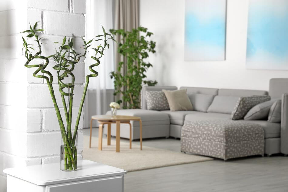 Common Lucky Bamboo Plant Problems and How to Treat Them