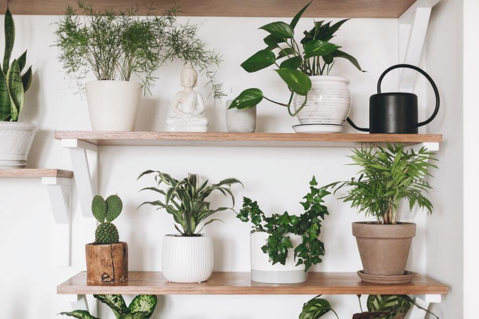 Considerations When Choosing a Plant for Your Small Apartment
