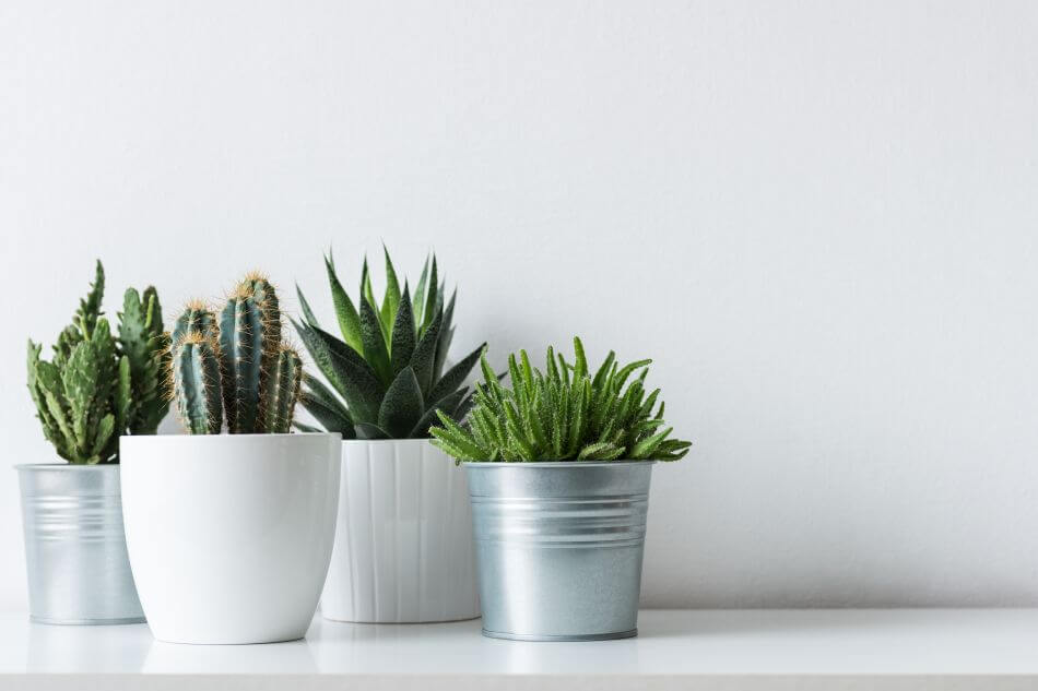 For Good Feng Shui, Don't Put These Plants in the Living Room