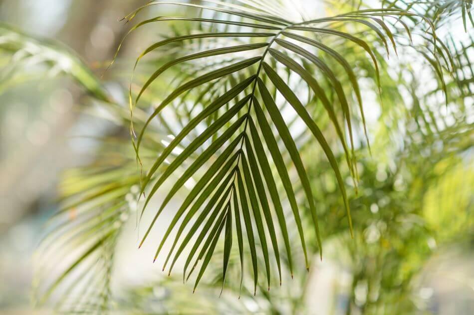 General Botanical Characteristics