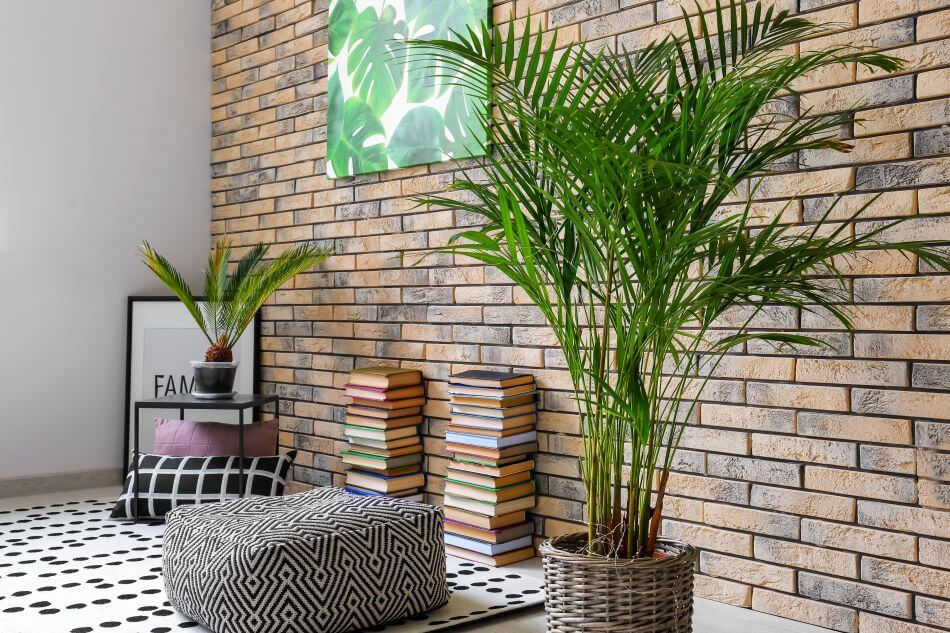 How to Grow Areca Palm Plants at Home