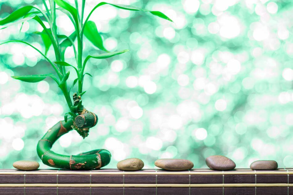 How to Propagate a Lucky Bamboo Plant