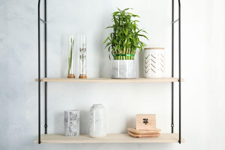 Lucky Bamboo Plants Meaning & Symbolism