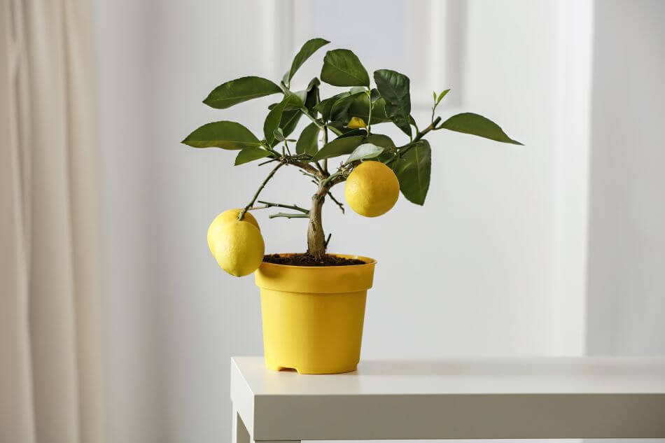 Plants to Avoid Positioning in the Bathroom