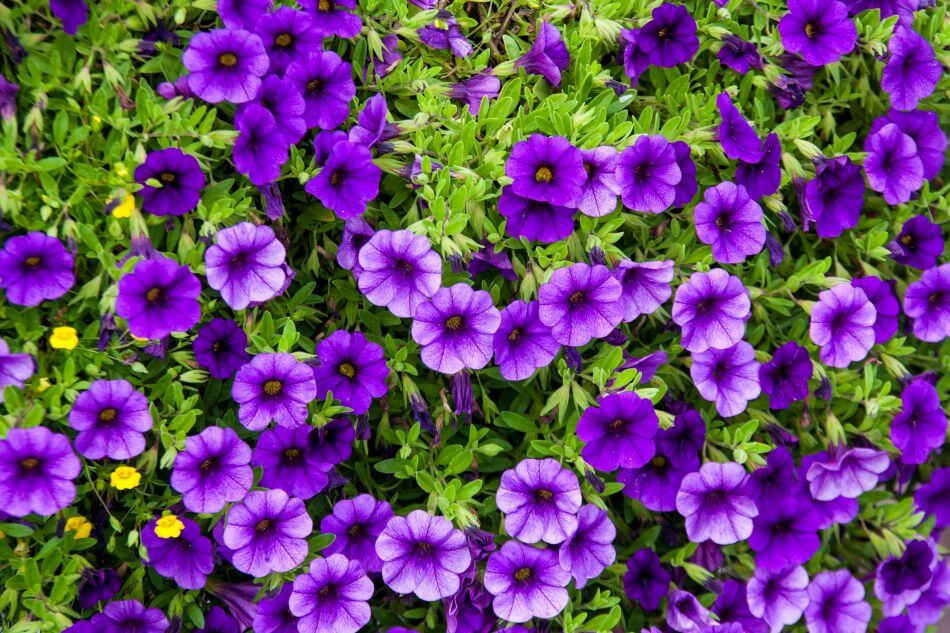 Purple Flowers in Art and Literature