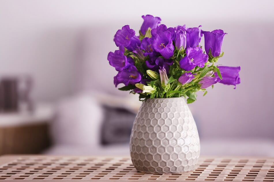 Suitable Gifting Occasions for Bellflowers