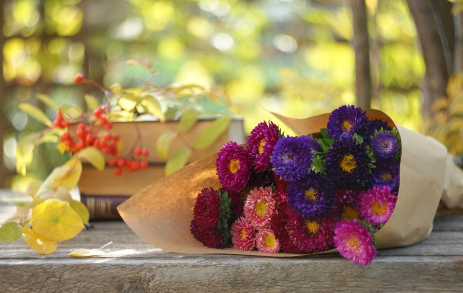 Suitable Gifting Occasions for China Aster Flowers