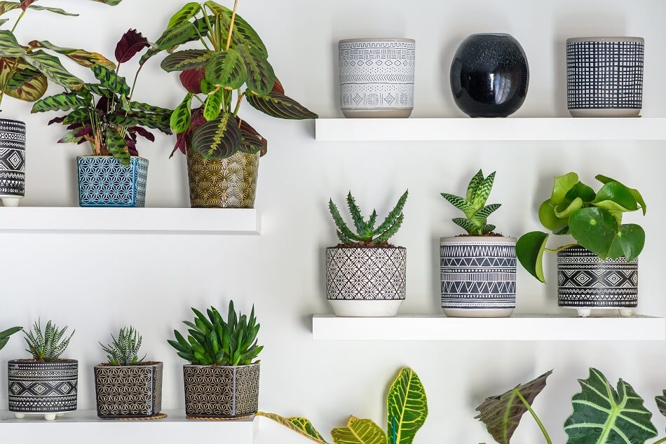 The Basic Principles of Plants and Feng Shui