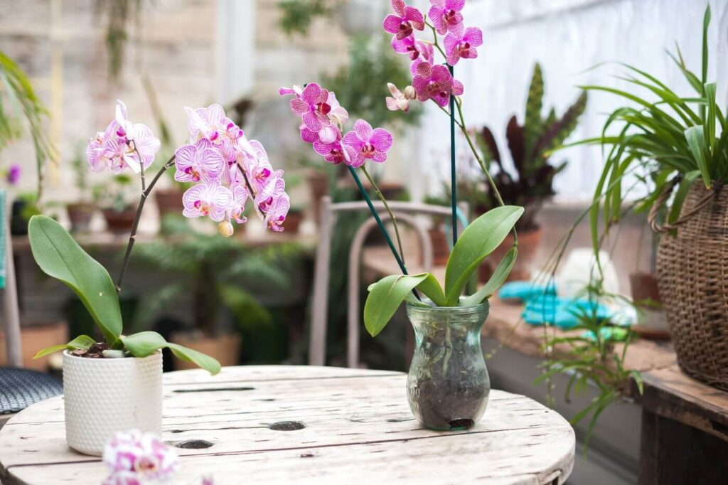 The Best Soil Mix for Orchid Plants (Essential Tips)