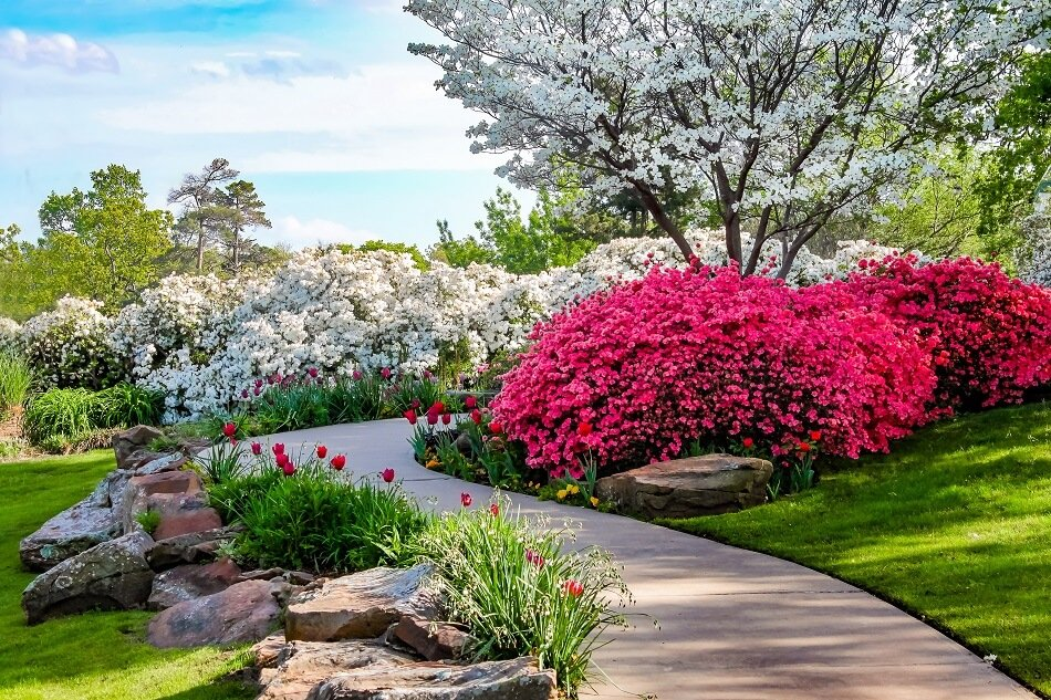 The Cultural Significance of Azalea Flowers