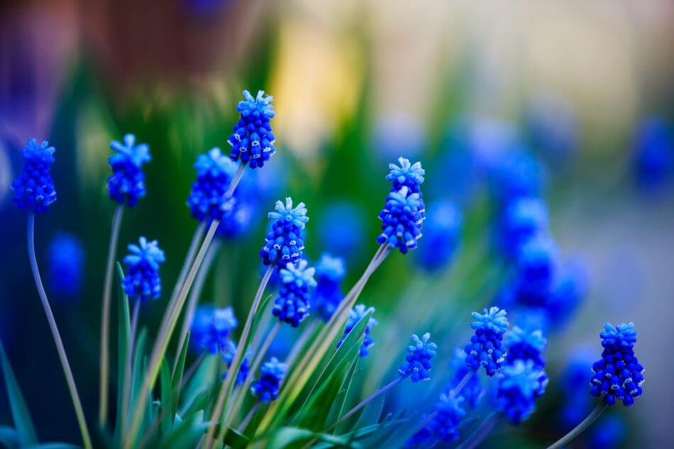 The Cultural Significance of the Color Blue Today