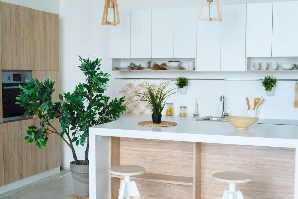 The Role of Plants and the Kitchen in Feng Shui
