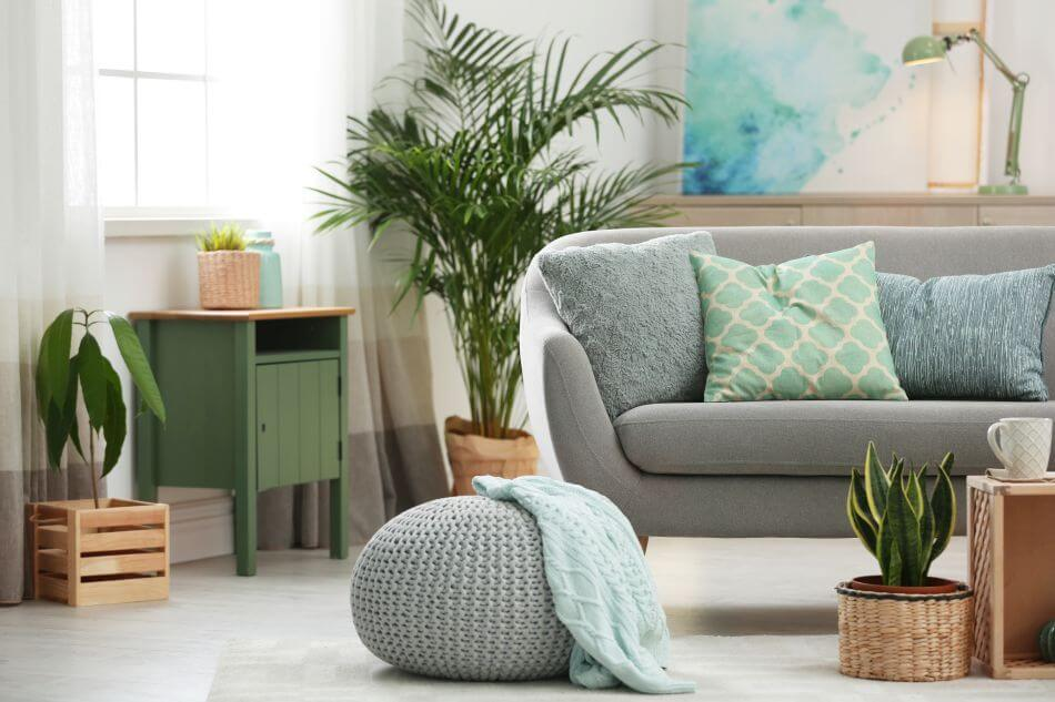 The Role of Plants and the Living Room in Feng Shui