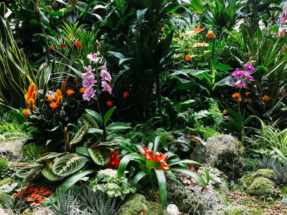 Typical Light Conditions in Orchid Plants' Native Habitats