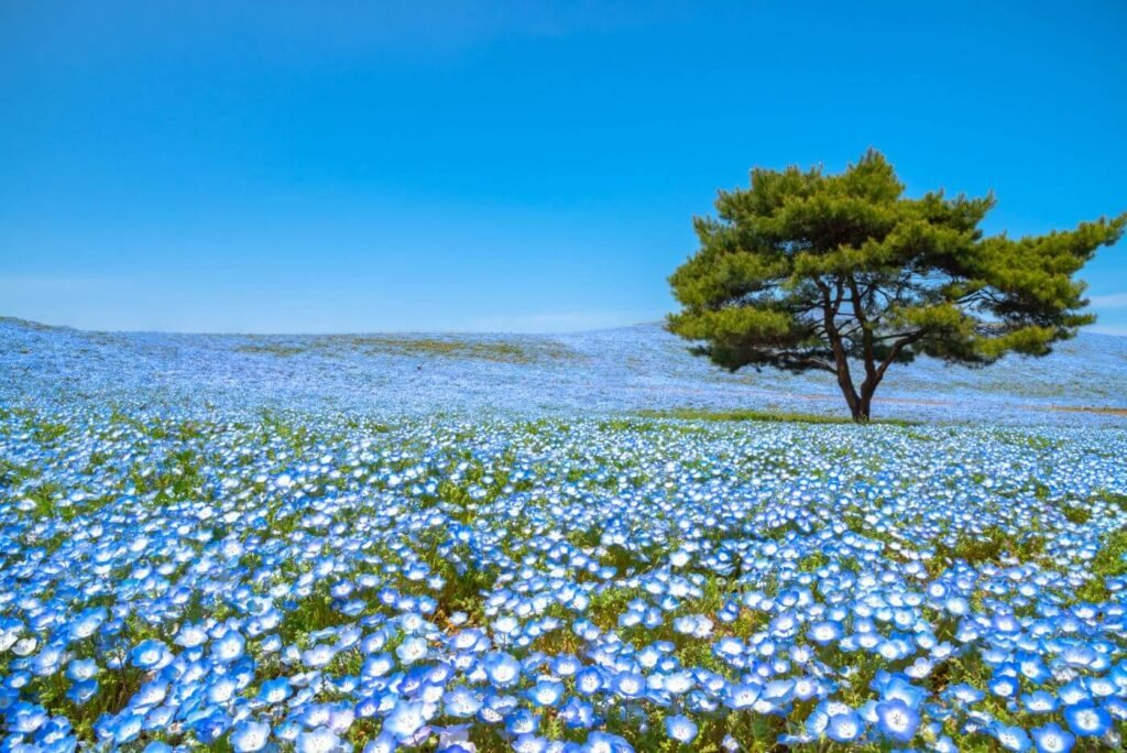 Ultimate Guide to Blue Flower Meaning and Symbolism