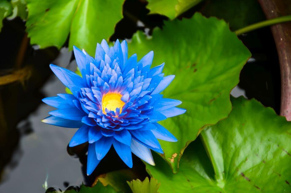 What do Blue Flowers Mean Spiritually?