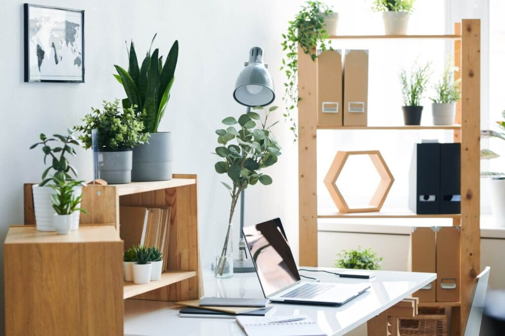 Best Feng Shui Plants for Business