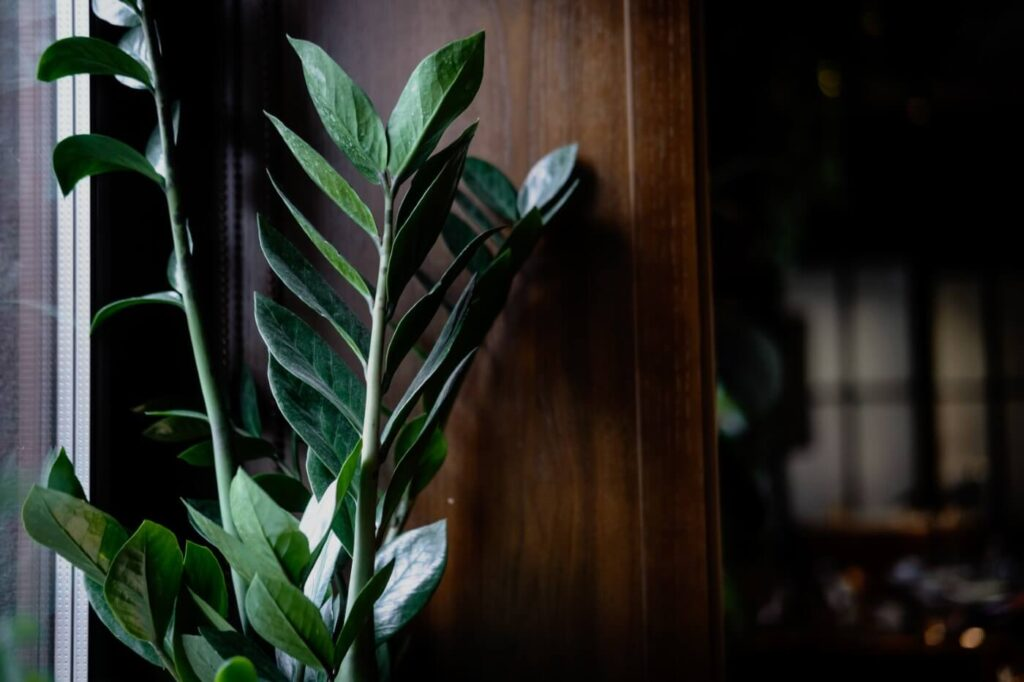 15 Best Houseplants for North-Facing Windows