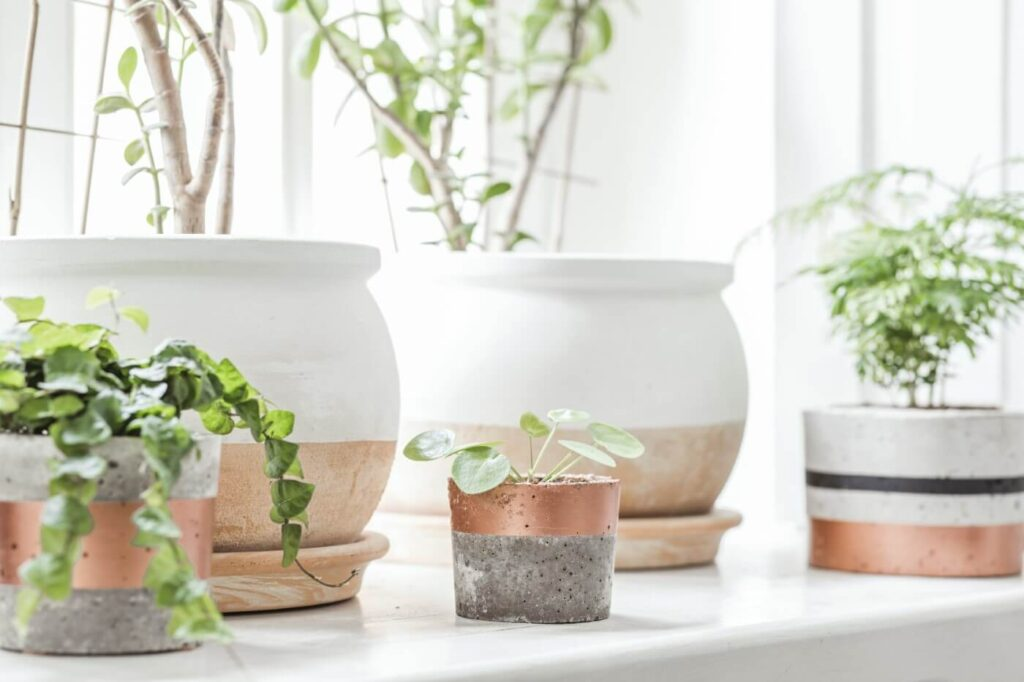15 Best Houseplants for South-Facing Windows