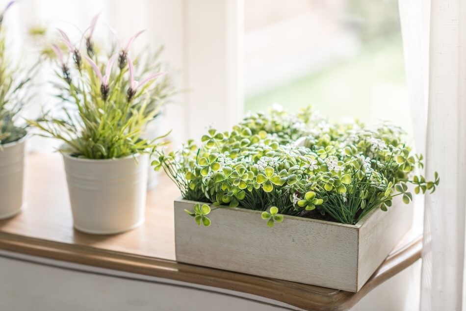How to Protect Houseplants from Overexposure to Direct Light and Heat