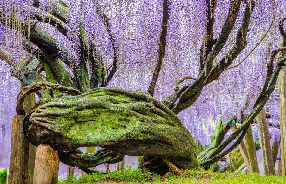 Japanese Folklore and Myth