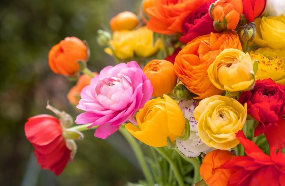 Suitable Gifting Occasions for Buttercup Flowers