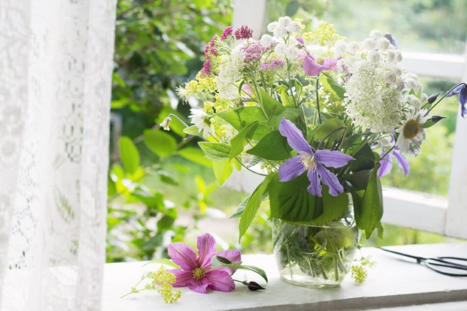 Suitable Gifting Occasions for Clematis Flowers
