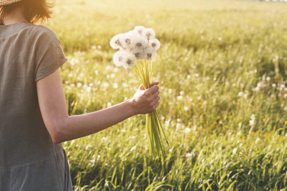 Suitable Gifting Occasions for Dandelion Flowers