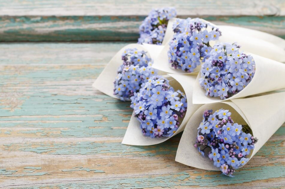 Suitable Gifting Occasions for Forget-Me-Not Flowers