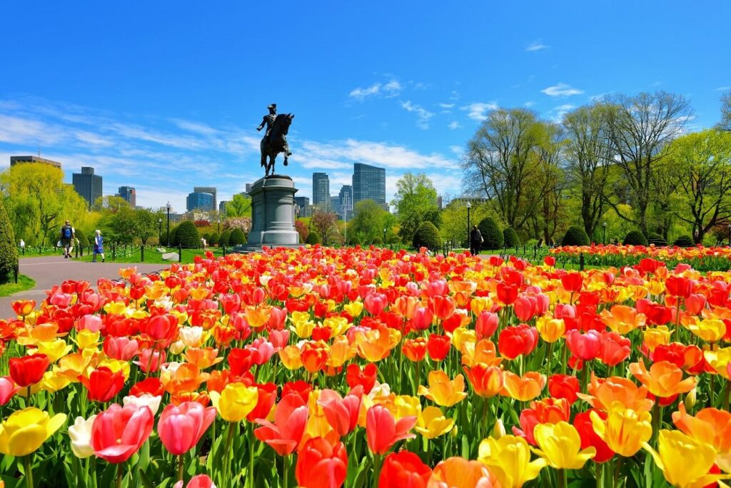 The Best Florists for Flower Delivery in Boston, MA