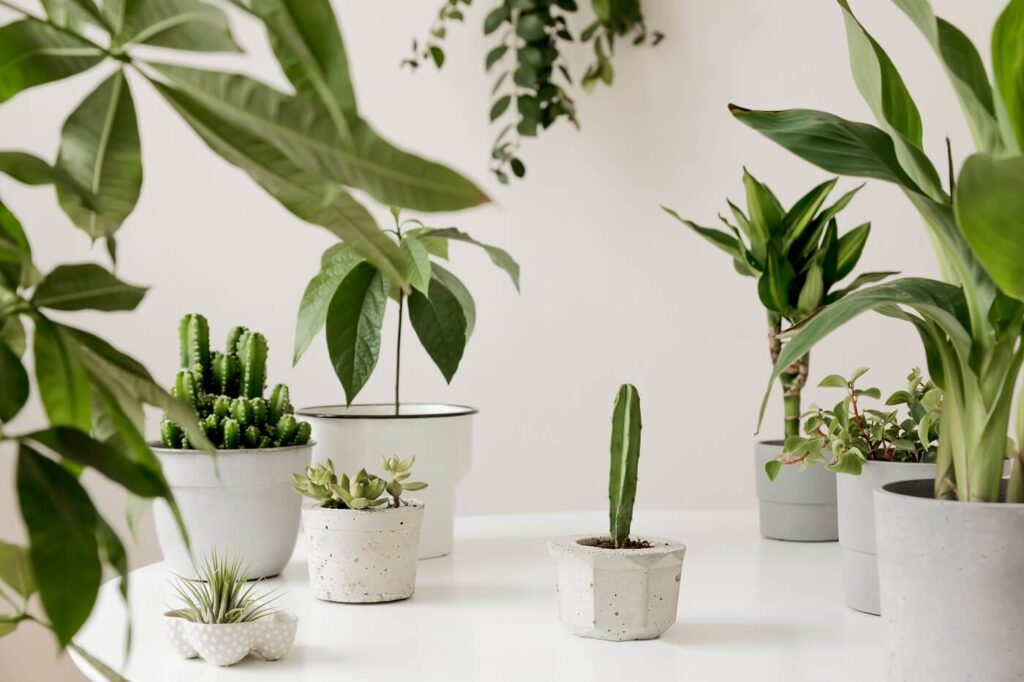 The Best Plant Delivery Services in London