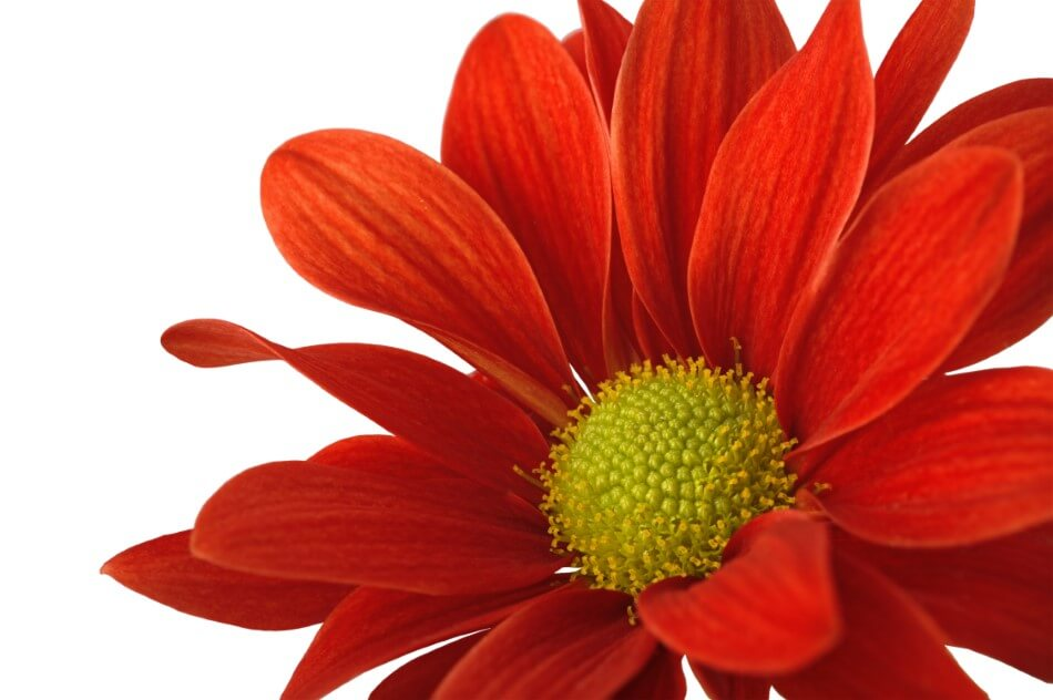 The Cultural Significance of Red Flowers in Ancient Greece