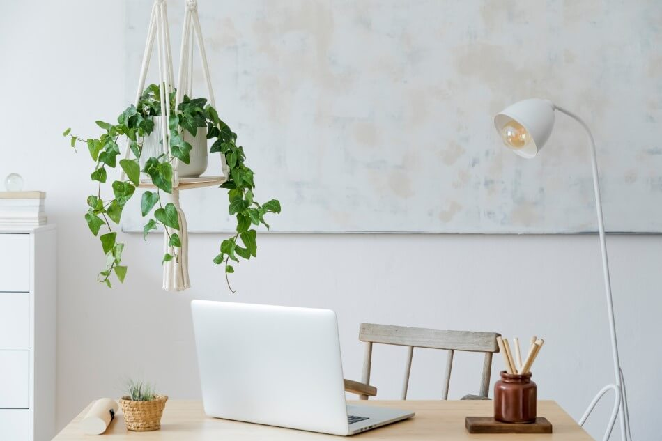 The Placement of Plants for Good Business Feng Shui