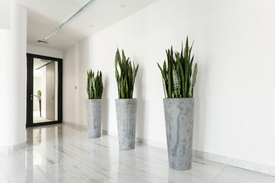 The Role of Plants in the Hallway in Feng Shui