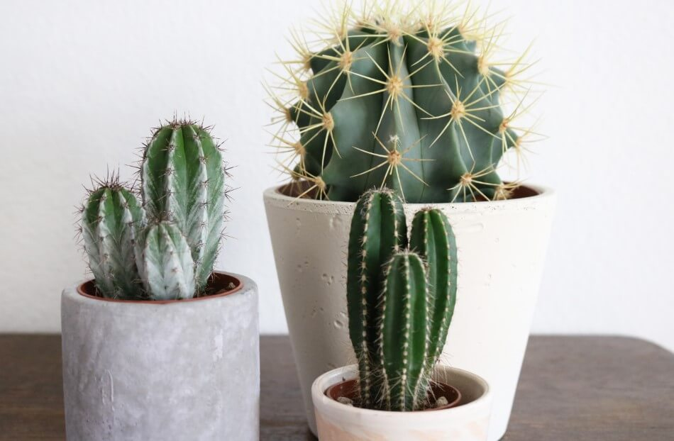 Types of Plants to Avoid Locating on an Office Desk