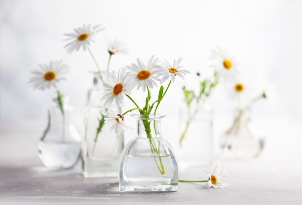 Suitable Gifting Occasions for Chamomile Flowers