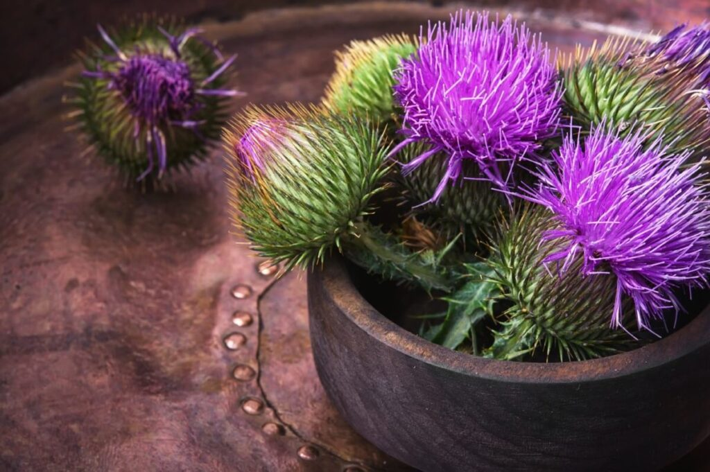 Suitable Gifting Occasions for Thistle Flowers