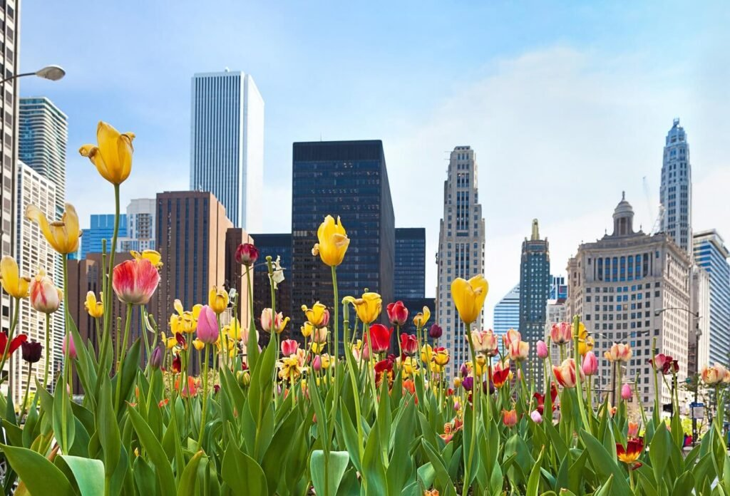 The Best Florists for Flower Delivery in Chicago, IL (2)